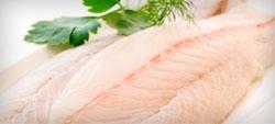Peixe Panga não oferece riscos